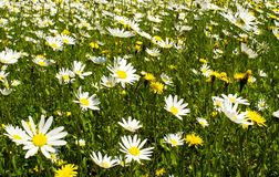 Gras und Blumen Lizenzfreies Stockfoto