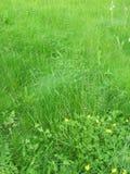 Gras und Blumen Stockfotografie
