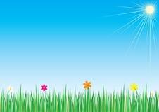 Gras und Blumen vektor abbildung