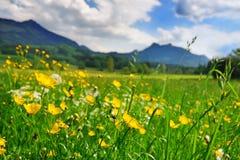 Gras und Blumen in der alpinen Wiese Stockbild