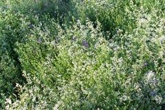 Gras- und Blumenfeld unter dem Sonnenlicht Lizenzfreie Stockfotos