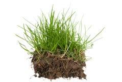 Gras und Boden Stockfotografie