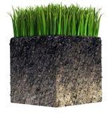 Gras und Boden Stockbilder