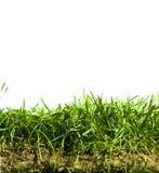 Gras und Boden lizenzfreies stockfoto