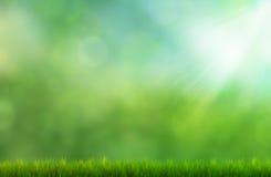 Gras und bokeh Lizenzfreies Stockfoto