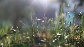 Gras und ein Morgenregen stock footage