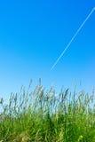 Gras und Fliegenflugzeug Stockfotografie