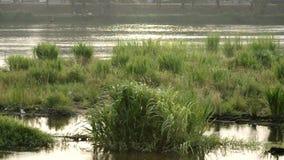 Gras- und Flussansicht stock footage