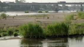 Gras- und Flussansicht stock video footage