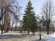 Gras und gefallene Blätter werden mit dem ersten Schnee bedeckt Stockfotografie