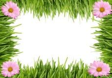 Gras- und Gänseblümchenhintergrund Lizenzfreie Stockbilder