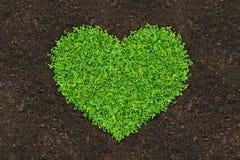 Gras und Grün stockbilder