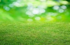 Gras und grüner Hintergrund Lizenzfreie Stockbilder