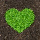 Gras und Grünpflanzen Lizenzfreie Stockbilder