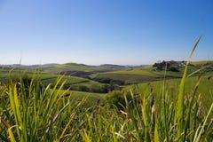Gras und Hügel Stockbild