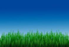 Gras und Himmel Stockfotografie