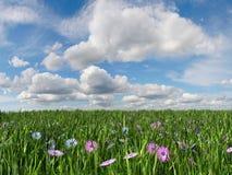 Gras und Himmel Stockfoto