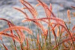 Gras und Himmel Stockfotos