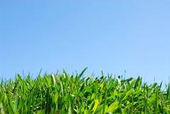 Gras und Himmel Stockbild