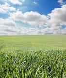 Gras und Himmel mit Wolken Lizenzfreies Stockfoto
