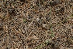 Gras und Kegel lizenzfreie stockfotos