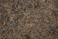 Gras und Kegel Stockbilder