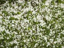 Gras und Klee und Blumenblätter Lizenzfreies Stockfoto