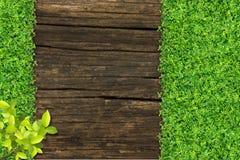 Gras und kleine Grünpflanzen stockbild