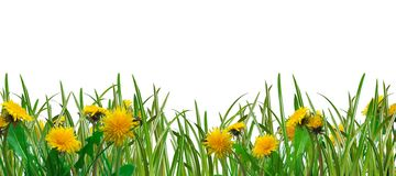 Gras und Löwenzahn lizenzfreie stockbilder