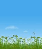 Gras und Libellen Lizenzfreie Stockfotos
