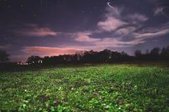 Gras und nächtlicher Himmel Lizenzfreies Stockfoto
