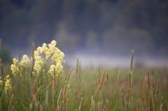 Gras und Nebel Stockfotos