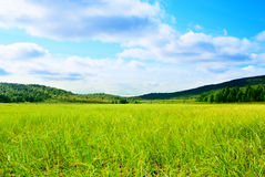 Gras und Nordberg lizenzfreies stockbild