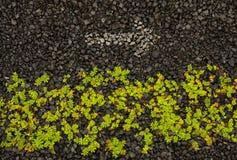 Gras und Pfeil auf Kies Stockfoto