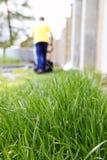 Gras- und Rasenmähen stockfoto