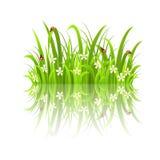 Gras und Reflexion Stockfoto