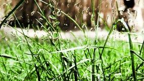 Gras und Regen stock video footage