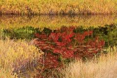 Gras und rote Reflexionen Stockbilder