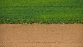 Gras und Sand Stockfoto