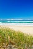 Gras und sandiger Strand auf dem Gold Coast Queensland Stockfotos