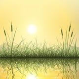 Gras und Schilfe Stockfoto