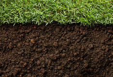 Gras und Schmutz Lizenzfreies Stockfoto