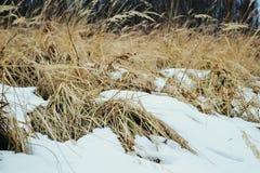 Gras und Schnee Lizenzfreie Stockfotos