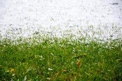 Gras und Schnee Stockfotos