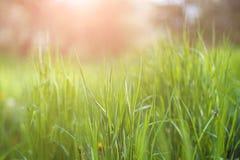 Gras und Sonne Stockbild