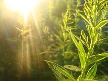 Gras und Sonne Lizenzfreie Stockfotos