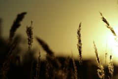 Gras und Sonnenuntergang Lizenzfreie Stockbilder