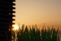 Gras- und Sonnenunterganghintergrund Stockbilder