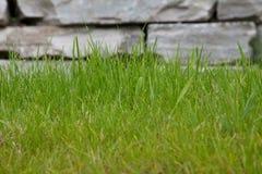 Gras und Stein Stockfoto