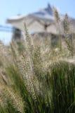 Gras- und Strandregenschirm. Stockbilder